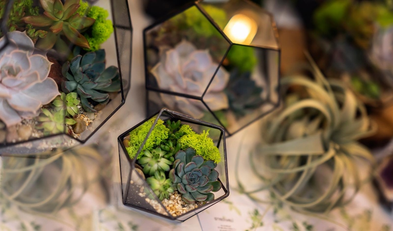 Microgardens: a whole new microworld of succulents