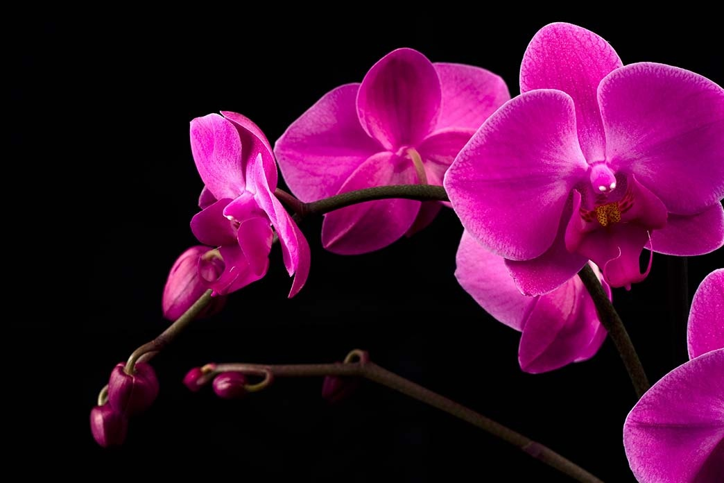 Thousands of blooming orchids at the Orchidea Ünnep, presented by Substral